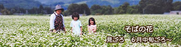 そば畑・そばの花