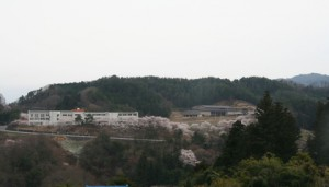 下條中学校 桜