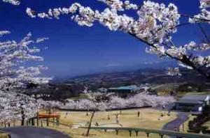 リフレッシュパーク下條 桜